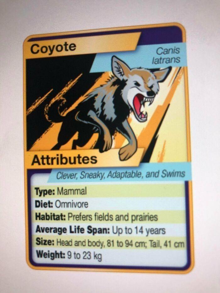 """""""Mój nauczyciel od biologii wykonał karty zwierząt do nauki, stylizowane na te z Pokemonów."""""""