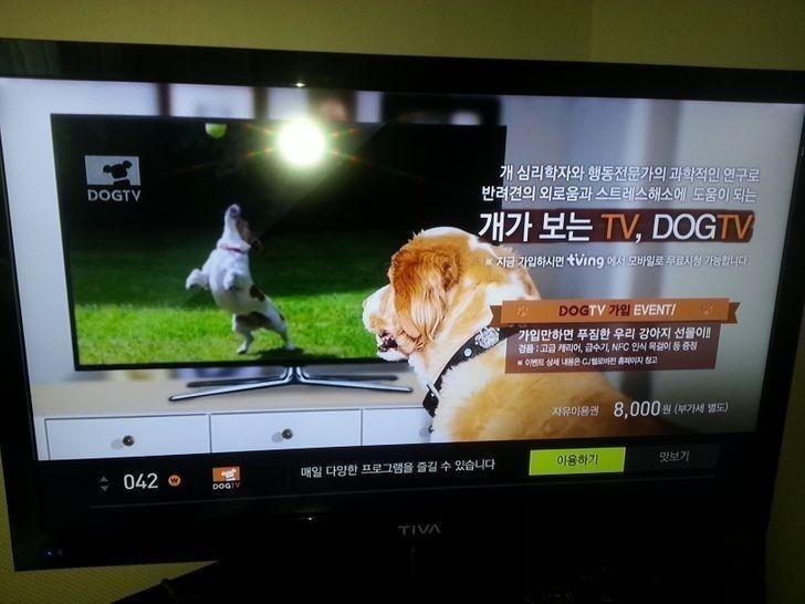 Jeden z kanałów telewizyjnych jest przeznaczony specjalnie dla psów.