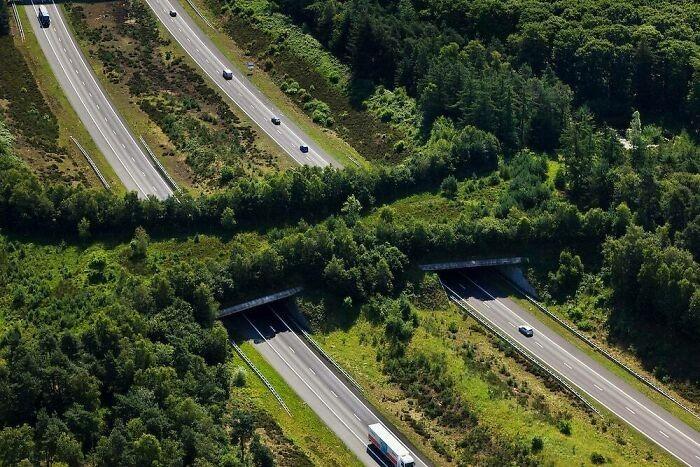Ekodukt nad autostradą A1, Veluwe, Holandia