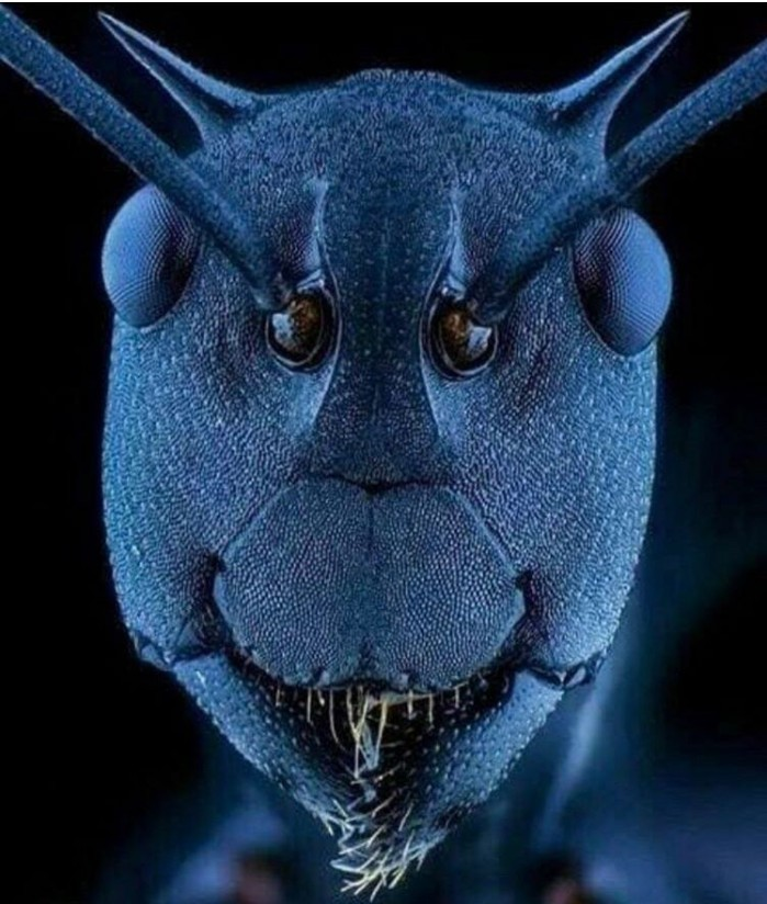 15. Mrówka pod mikroskopem
