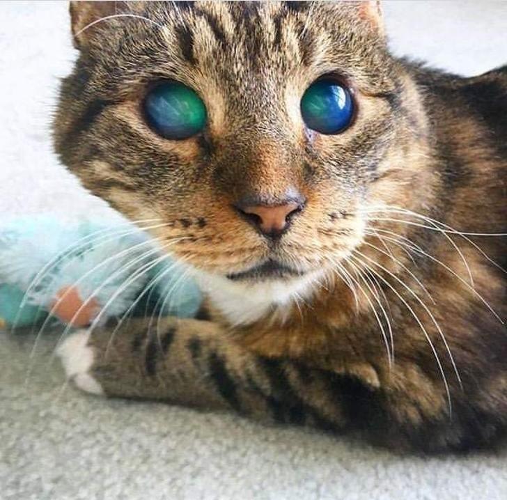 3. Niezwykłe oczy ślepego kota