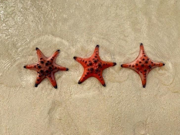 10. Rozgwiazdy z 6,5, i 4 ramionami