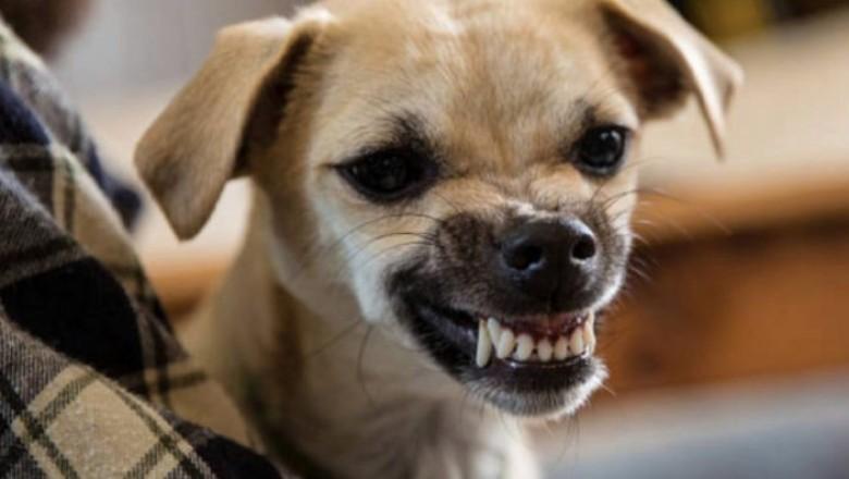 Psy Bezproblemowo Rozpoznają Złych Ludzi W Otoczeniu W Tej Kwestii